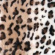 Stock Photo: Texture of leopard skin soft light