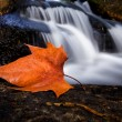 Autumn leaf in a waterfall at the portuguese national park — Stock Photo