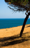 Beautiful landscape with the seaside, Algarve Portugal — Stock Photo