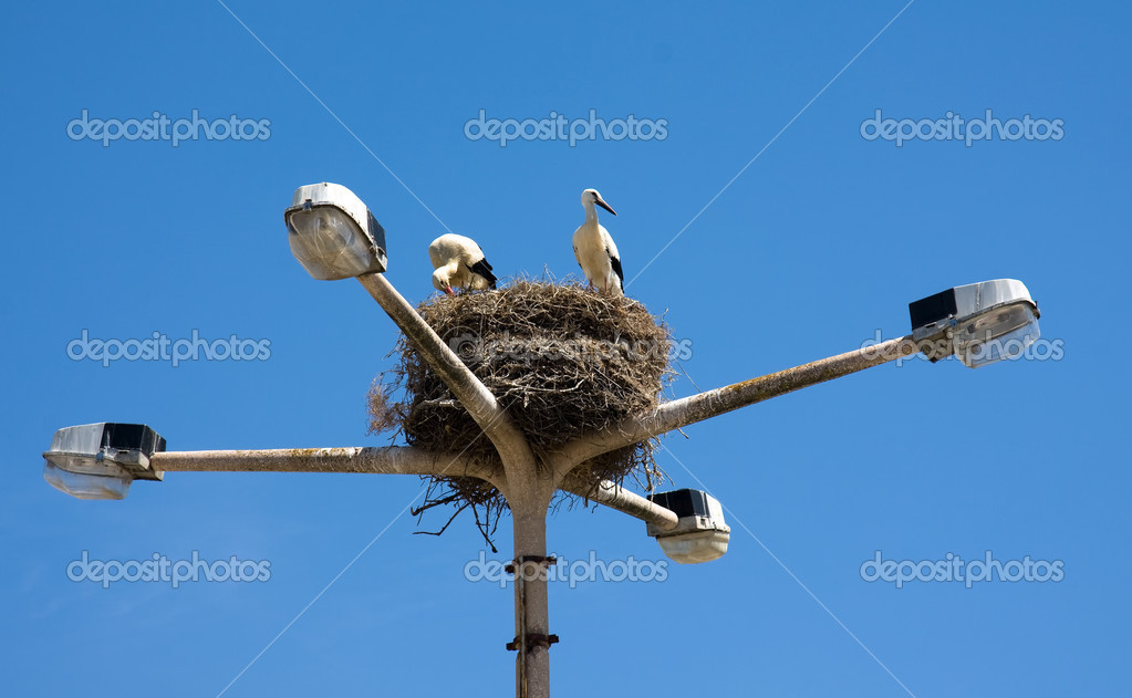 Two stork on nest in a light pole, Algarve Portugal — Stock Photo #4116575