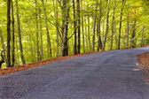 прекрасный вид дороги в лесу с осенью осенью цвета. — Стоковое фото