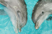 Happy dolphins — Stock Photo