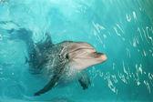 Happy dolphin — Stock Photo