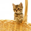 Stock Photo: Kitten in woven basket