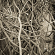 Texture of the branches — Stock Photo
