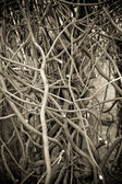 Texture of the branches — Photo