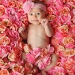 Baby in a bed of roses - Stock Photo