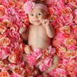Baby in a bed of roses - Stockfoto