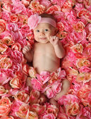 Baby in a bed of roses — Stock Photo