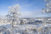 Ukrainian winter — Stock Photo
