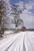 Winterlicher Feldrand mit alten Baeumen — Stock Photo