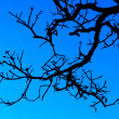 Stock Photo: Silhouette Tree