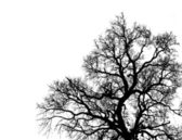 Silhouette Tree — Stock Photo