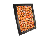 Hazelnut in a frame — Stock Photo