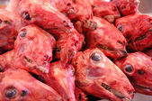 Skinned Sheep Heads — Stock Photo