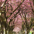Blossom Avenue, Edinburgh - Stock Photo