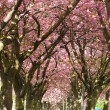 Stock Photo: Blossom Avenue, Edinburgh