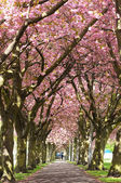Blossom Avenue, Edinburgh — Stock Photo