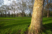 Tree in Green Park — Stockfoto