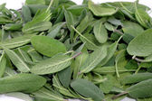 Fresh green sage leaves — Stock Photo