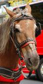 Un primer plano de un caballo — Foto de Stock