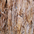 Royalty-Free Stock Photo: Dry grass