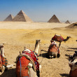 Giza pyramids, cairo, egypt — Stock Photo #4213544