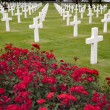 Stock Photo: Americcemetery in OmahBeach, Normandy
