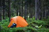 Camping i skogen — Stockfoto