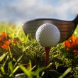 Golf club and ball in grass — Foto de Stock