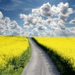 Stock Photo: Oilseed and clouds