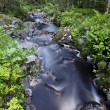 Foto Stock: Woodland stream