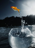 Goldfish jumping out of the water — ストック写真