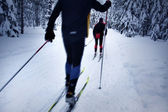 Skier in a winter forest — Stock Photo