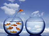 水の外に飛び出す金魚 — ストック写真