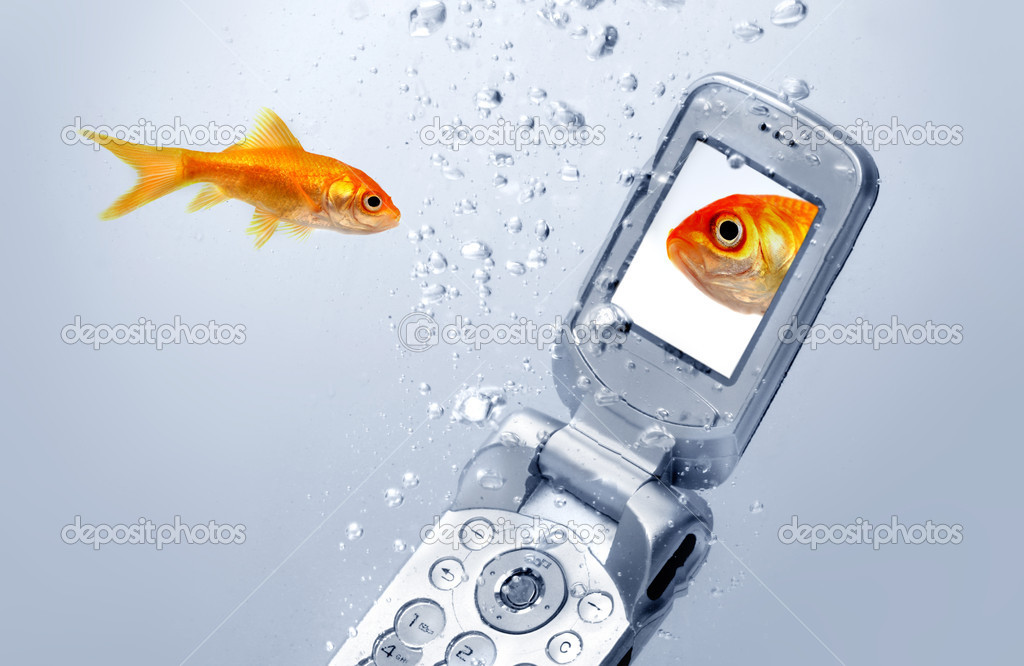 Un poisson rouge nage par un t l phone cellulaire for Tarif poisson rouge