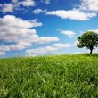 Lonely tree on green filed — Stock Photo