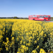 Stock Photo: Bus and Oilseed