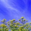 Flowers, clouds and the blue sky — Stock Photo