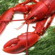 Lobster — Stock Photo #4230916