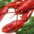 Lobster — Stock Photo #4230921