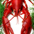 Lobster being prepped for cooking - Stock Photo