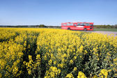 Bus and Oilseed — Stock Photo