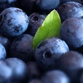 Macro shot of wet fresh blueberry — Stock Photo