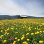 Northern Swedish Summer Colors — Stock Photo