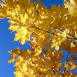 Stock Photo: Autum leave