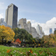 Central Park in NYC - Stock Photo