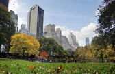 Central Park in NYC — Stock Photo