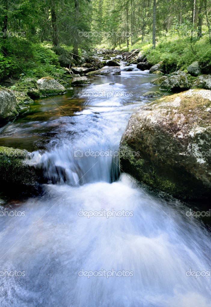 Woodland stream  — Stock Photo #4255836