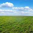 Stock Photo: Green field under midday sun